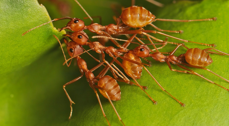 House-Hunting Ants