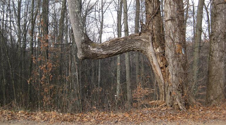 Trail Trees
