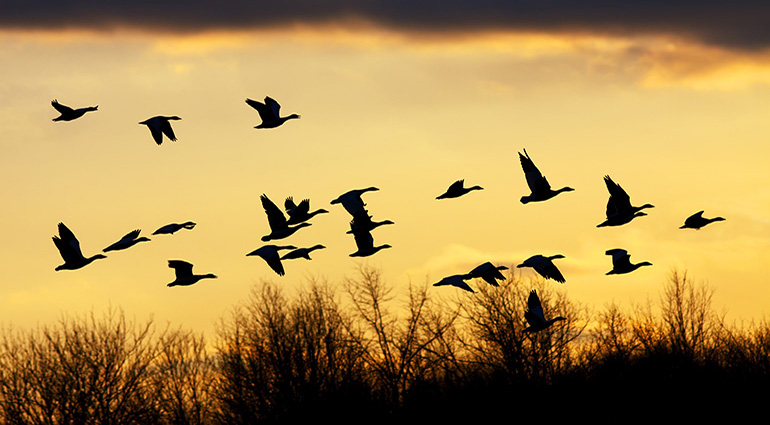 Of Geese and Difficult People