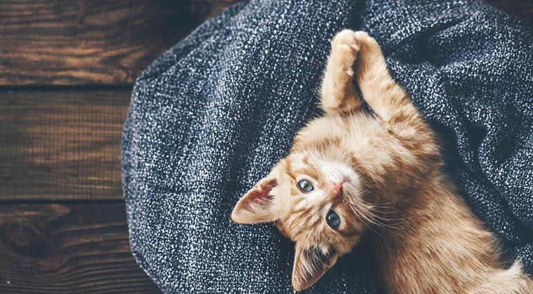 Mèo Và Lời Nói Dối Cỏn Con