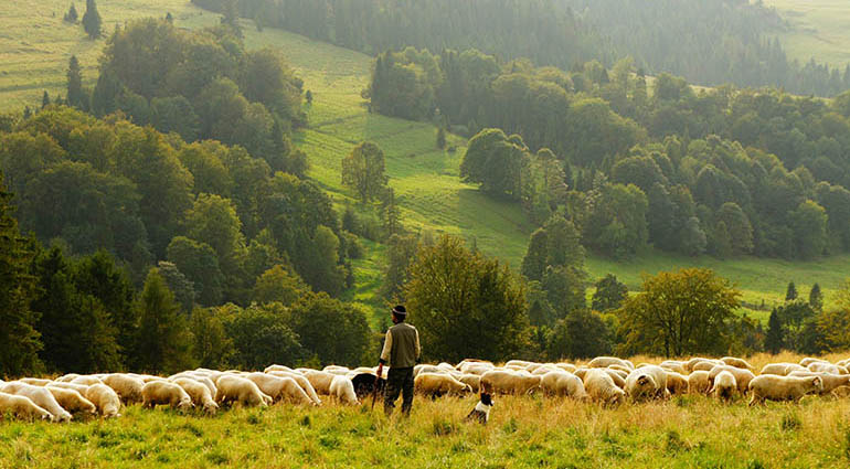 A Shepherd for Life