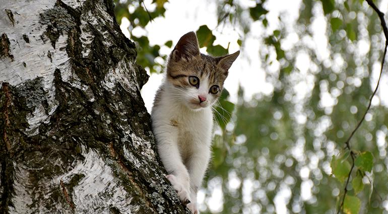 Grimpée dans un arbre