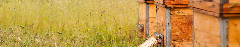 ผึ้งและงู