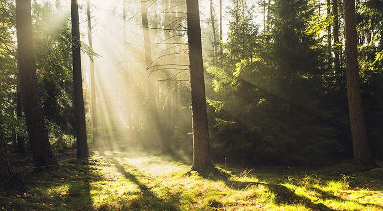Andar en la luz
