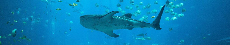 Wenn Haie nicht beißen