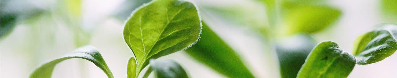 Семена благодати